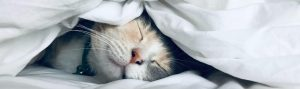 Cat Smiling Under a White Duvet | How to Sleep Better When Your Routine is Thrown Off